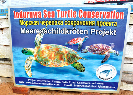 Drop in tourist arrivals affects turtle hatchery | Sunday