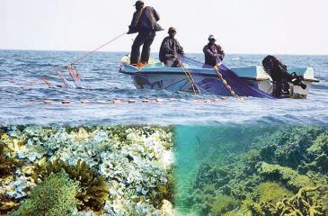 'Surukku' nets in operation inside the Bar Reef