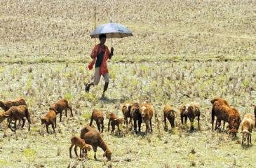 'Unfair': poor farmers are most at risk from future humid heatwaves but have contributed little to the emissions that drive climate change. Photograph: NurPhoto/via Getty Images