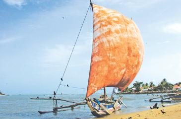 An outrigger canoe known as oruwa anchors in the Negombo lagoon.