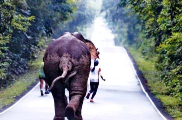 Two runners, who tried to take selfies with a wild elephant in Khao Yai National Park in Nakhon Nayok province, had to sprint for their lives after it turned on them and chased them.