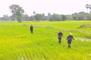 Agriculture makes a substantial contribution to the economy