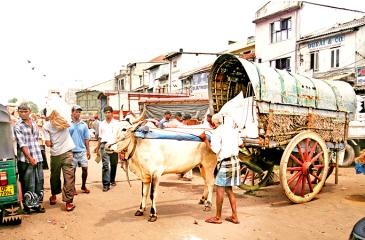 IN A CONTINUUM: The wheel comes full circle, with rickety animal-drawn carts sharing road space with modern machines. The bullock cart anchors in the Pettah market to load sacks of flour