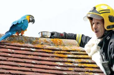 Jessie the parrot was not unambiguously appreciative of the firefighters' efforts