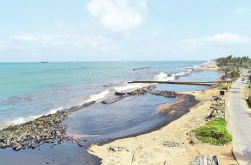Part of the coastal belt affected by the oil spill
