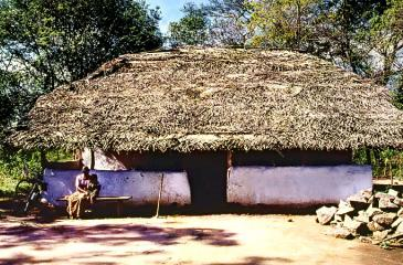 A SAGA OF EVOLUTION:A traditional home in Ehetuwewa village. The wattle and daub walls have been whitewashed with lime