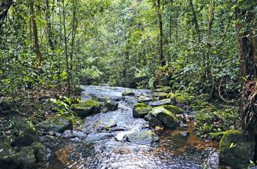 PERFECT SCENE: A placid cool stream that runs through the mountain range