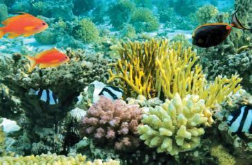 A coral reef in Kalpitiya
