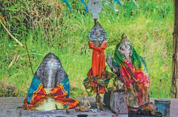 Wrapping colourful spiritual cloths around the two images of Lord Ganesh bearing spiritual spears at a roadside shrine (Kovil) in Dickoya