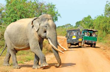 A salient point made in the AG's report is the need to limit the number of vehicles entering the Yala National Park.