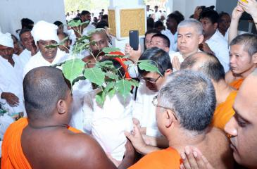 The Sacred Bo Sapling prior to its departure from Sri Lanka