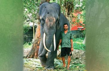 Myan Kumara and his mahout Wasantha