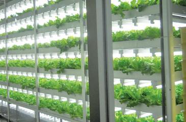 An artist's impression of  vertical farming