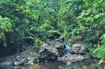 GREEN DREAM: A cool stream cascades through rocks under a forest canopy