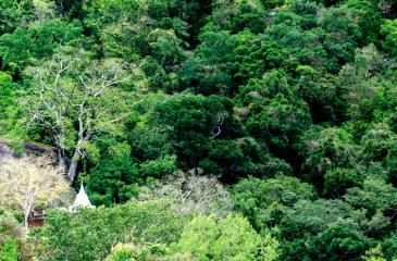 The white dagoba viewed through the green carpet of Sankapala Mountain