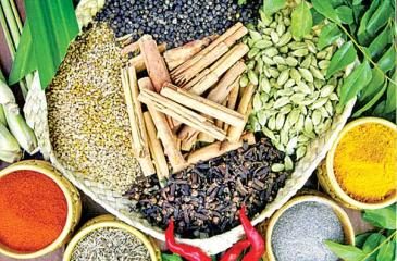 Spice cultivation which was a cottage industry in the past is now becoming a commercial industry.