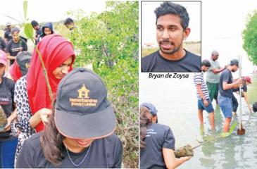 Colombo University accounts students planting mangroves                                           Pix by Dushmantha Mayadunne