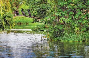 Colombo's wetlands