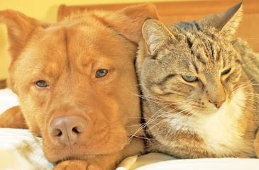 Many cats and dogs live together harmoniously. (Courtesy of iStock)