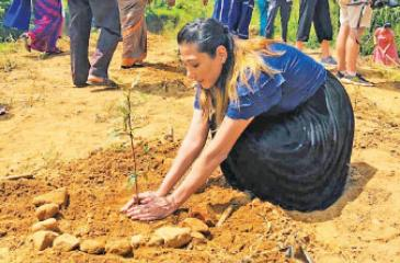 A blogger plants a tree.
