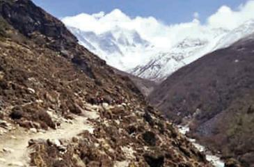 Plant life is expanding in the area around Mount Everest, such as along this footpath. (Pic: Karen Anderson/University Of Exeter The Guardian Uk)