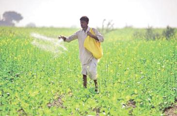 The Government provides 50 kilos of chemical fertiliser at Rs 500 to paddy cultivators through the Govi Jana Seva centres.
