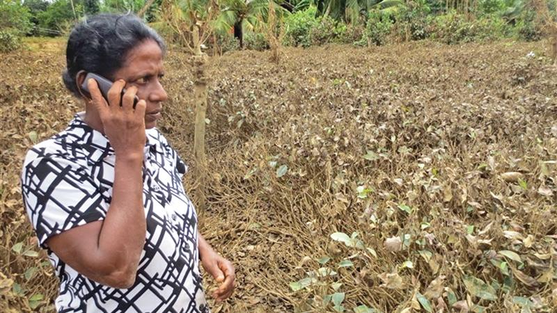 Jayanthi Thuduwage and one of her daughters were rescued by by neighbours. Her tea cultivation of nearly two acres at Akuretiya, Baddegama adjoining the Gin Ganga was completely destroyed by the floods. She said she could never dream of replanting her land.