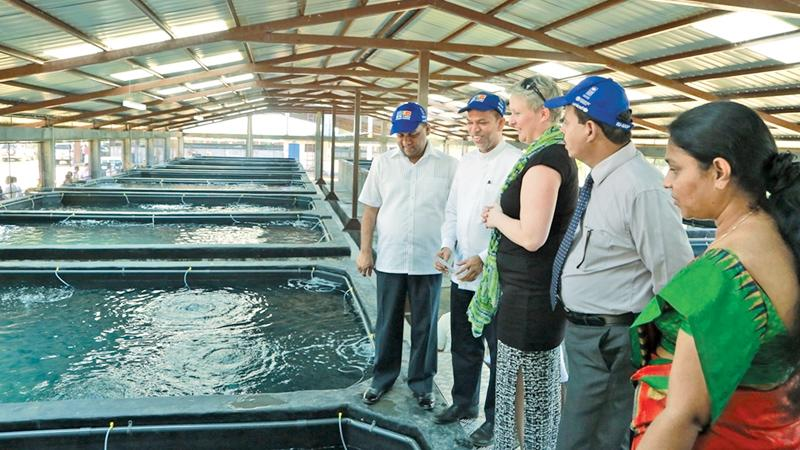 From left: Mahinda Amaraweera – Minister of Fisheries and Aquatic Resources Development, M.L.A.M. Hizbullah – State Minister of Rehabilitation and Resettlement, Libuse Soukupova – Head of Cooperation of the European Union Delegation, Upali Mohotti – Chairman of the National Aquaculture Development Authority (NAQDA) are seen observing the tanks at the Multi-Species Marine Finfish Hatchery in Tharmapuram, Batticaloa.