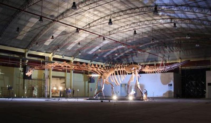 A cast of the skeleton of Patagotitan mounted in the exhibition center of Trelew, Argentina, the city that is home to the Egidio Feruglio Museum, which is where the actual bones are stored.  (Pic: Diego Pol)