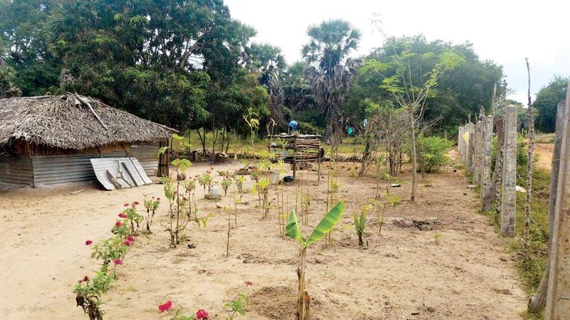 One year into resettlement in Pilakudyirrippu PIC: COURTESY CPA