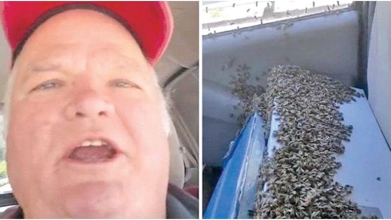 Wallace Leatherwood and his bees