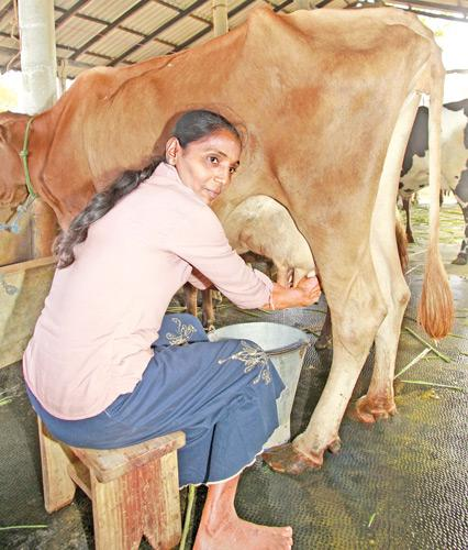 The quality of  liquid milk is a crucial issue
