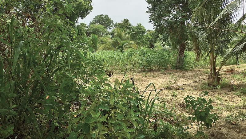 Scene of crime at brinjal field