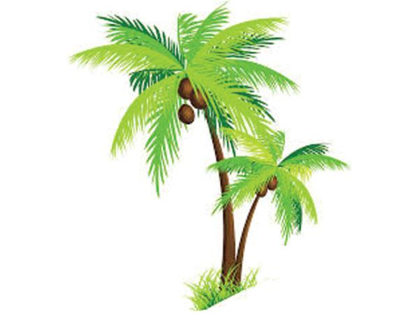 uses of parts of coconut tree