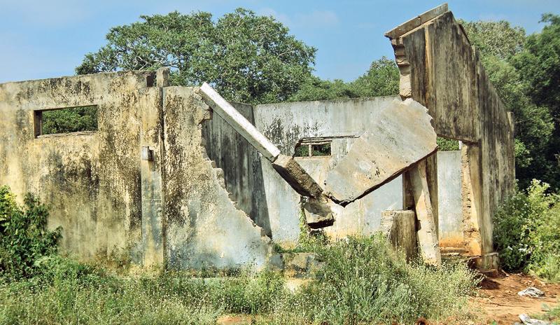 Kondachchi Cashew plantation in Musuli, Mannar