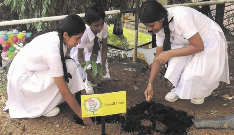 Children of Ferguson High School, Ratnapura planting a tree to support the cause.