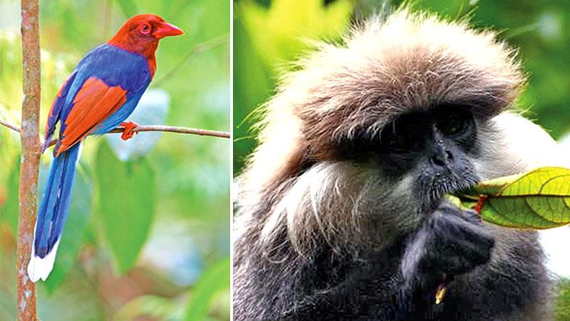 Some of Sri Lanka's endemic species which may not last for long as humans increasingly invade their habitats.