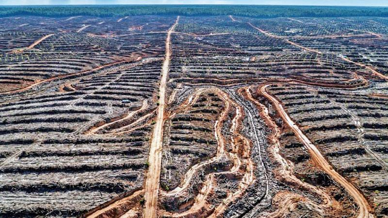 Deforestation in Indonesia to make way for a palm oil concession.  Pic: Ulet Ifansasti/Greenpeace