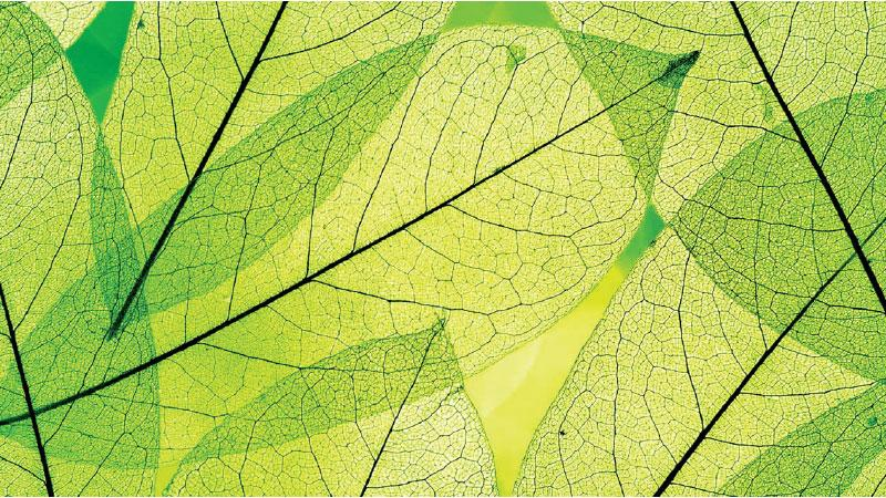 Artificial photosynthesis: can we harness the energy of the sun as well as plants?