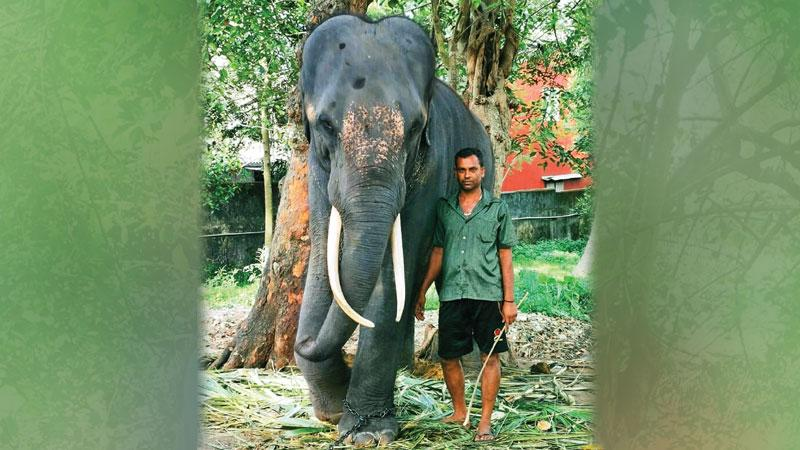 Myan Kumara and his mahout Wasantha
