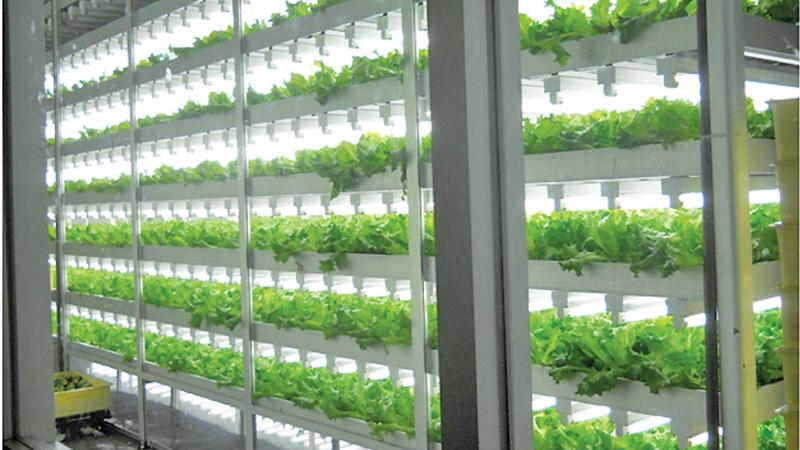 An artist's impression of  vertical farming