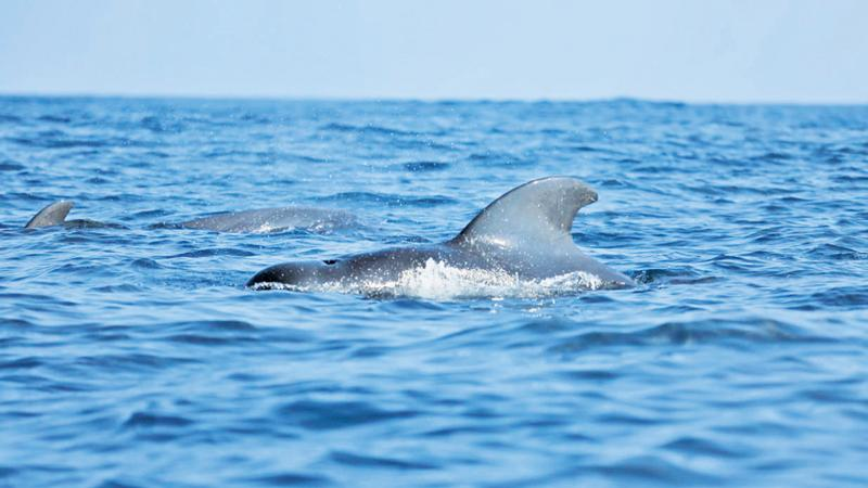 Dolphin and whale watching in focus