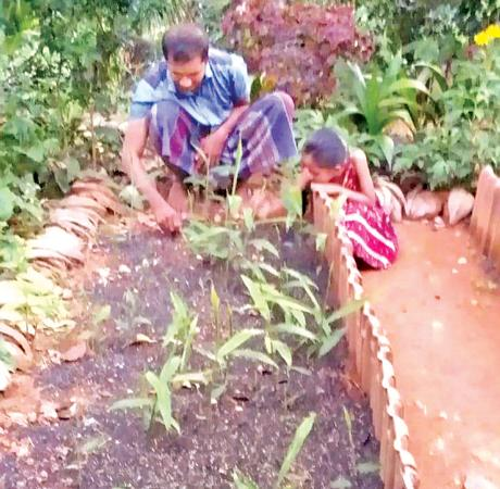 A ginger farmer attends to his ginger cultivation helped by his daughter.
