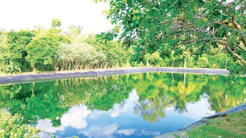 The pond area