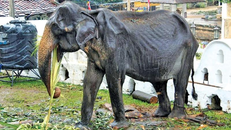 The picture of Tikiri showing her emaciated body, that went viral. Pic: Internet