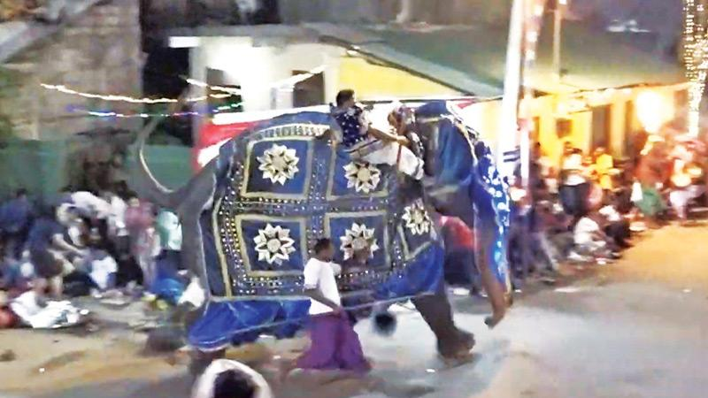 Stampeding elephant: Kotte Rajamaha Vihara Randoli Perehera