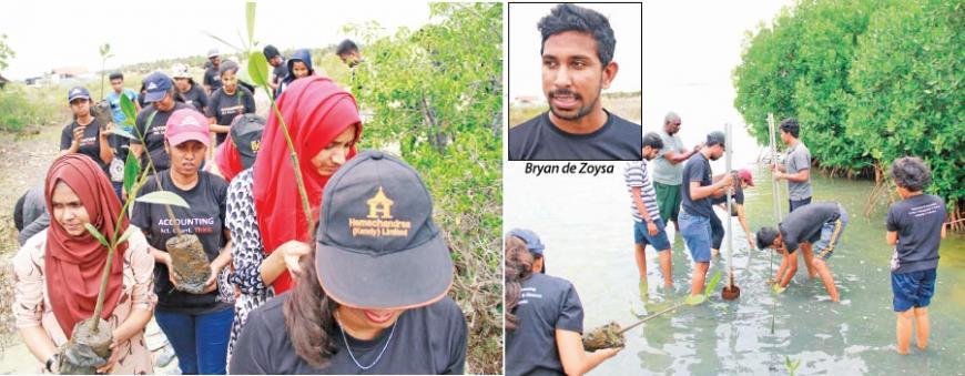 Colombo University accounts students planting mangroves                                           Pix by Dushmantha Mayadunne
