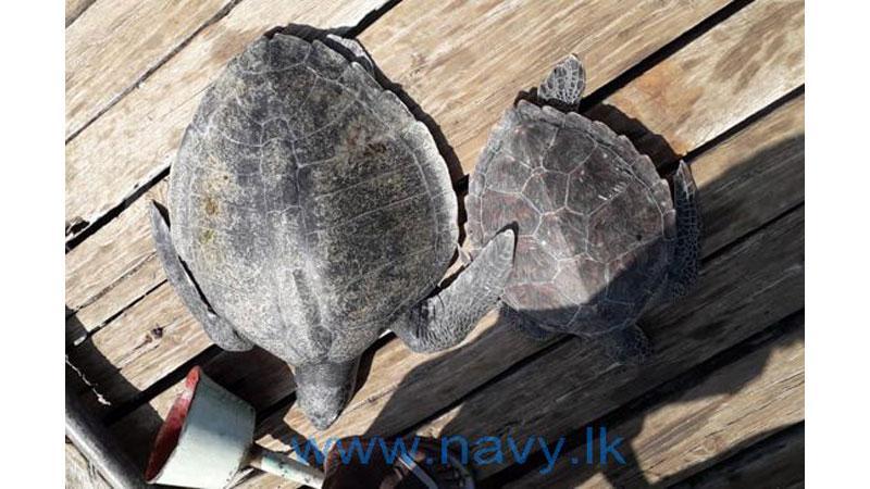 Navy rescues fifteen sea turtles entangled in fishing net