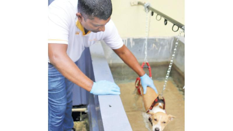 Aura receives hydrotherapy