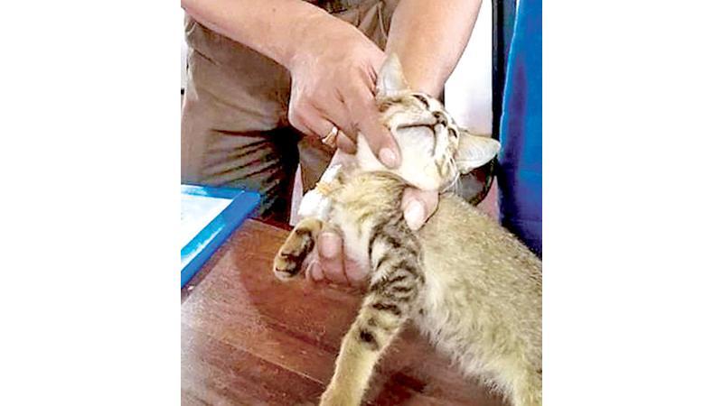 Drug smuggling cat